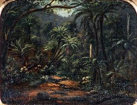 Ferntree Gully in the Dandenong Ranges, 1857 (oil on canvas on cedar panel)