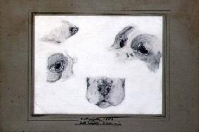 Kunstdruck von Frederic Leighton - Studies of the Artist's Dog