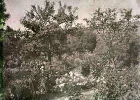 View of Giverny, Monet's Garden, early 1920s (photo) 19th