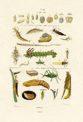 Insects 1833-39