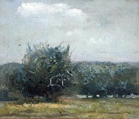 Apple Tree Field (oil on canvas)