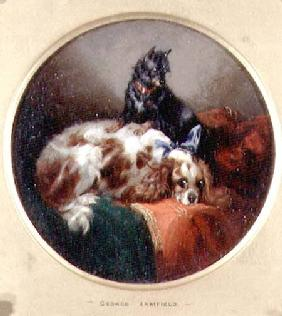 Blenheim Spaniel and Terrier Painting a