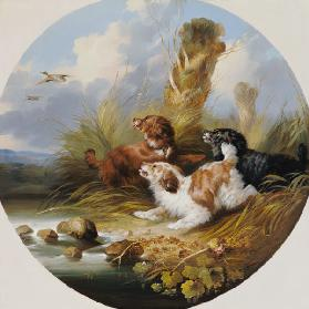 Three Spaniels Flushing Mallard 19.Jh