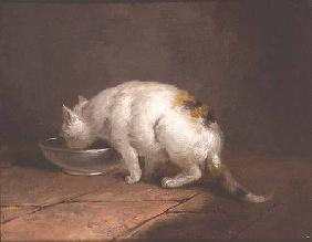 The Artist's Cat Drinking 1792
