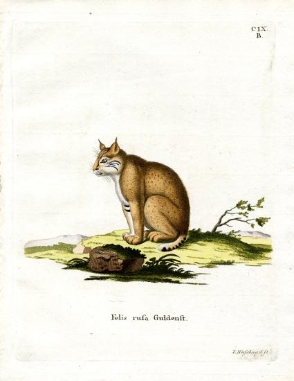 Bobcat Deutsch