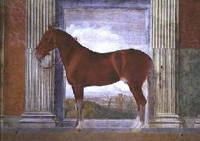 Sala dei Cavalli, detail showing a portrait of a grey horse from the stables of Ludovico Gonzaga III 1528