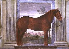 Sala dei Cavalli, detail showing a portrait of a chestnut horse from the stables of Ludovico Gonzaga 1528