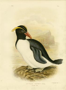 Crested Penguin 1891