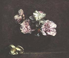 Roses of Nice 1882