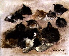 Study of cats and kittens 1896