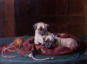 Pug Puppies in a Basket (panel)