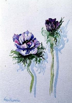 Anemone, 1998 (w/c on paper) (see also 124450)