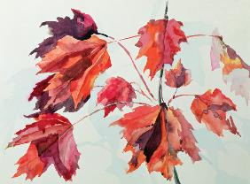 No.24 Autumn Maple Leaves (w/c)