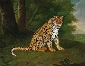 Kunstdruck von Jacques-Laurent Agasse - A Leopard in a landscape