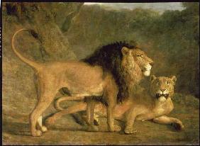 Kunstdruck von Jacques-Laurent Agasse - Löwe und Löwin in der Exeter Menagerie