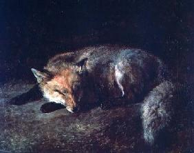 Kunstdruck von Jacques-Laurent Agasse - Sleeping Fox