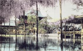 Wisteria blossom over the pond in the Kameido Temple Gardens, Tokyo, late 19th century (hand coloure 1916