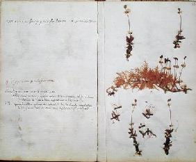 Page 15 from a Herbarium