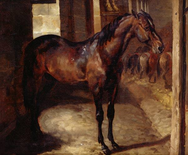Dark Bay Horse in the stable