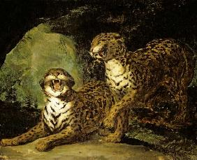 Two Leopards 1817-20