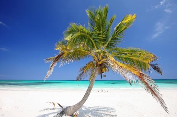 bilder von palmen fotos von meer natur palmen tropen k ste super sch ne bilder von palmen. Black Bedroom Furniture Sets. Home Design Ideas