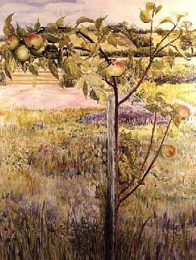 Apple Tree in a Suffolk Landscape (w/c)