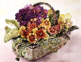 Primulas in a Basket (w/c)