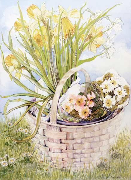 Daffodils and primroses in a basket