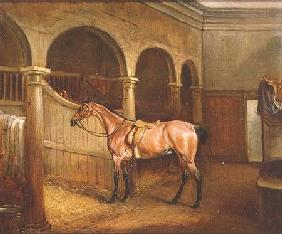 Lord Villiers' Roan Hack in the Stables at Middleton Park 1834