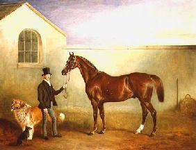 Mr Meakin holding Sir Robert Peel's Chestnut Hunter with his dogs 'Hector' and 'Jem' 1853