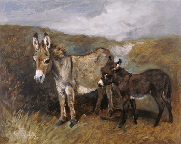 Donkeys out on the Moor c.1890