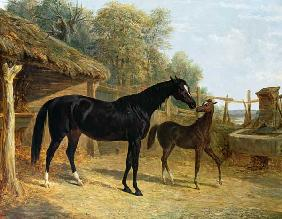 Levity, the property of J.C.Cockerill Esq., with her foal Queen Elizabeth, the property of Lord Dorc 1843