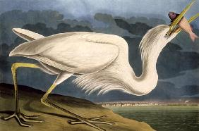 Kunstdruck von John James Audubon - Great White Heron, from 'Birds of America', engraved by Robert Havell (1793-1878) 1835 (coloured eng