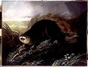 Kunstdruck von John James Audubon - Otter Caught in a Trap