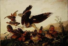 Kunstdruck von John James Audubon - Red-Shouldered Hawk Attacking Bobwhite Partridges