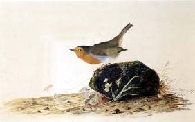Kunstdruck von John James Audubon - A Robin Perched on a Mossy Stone