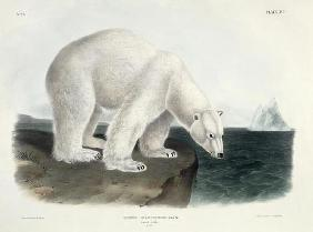 Kunstdruck von John James Audubon - Ursus Maritimus (Polar Bear), plate 91 from 'Quadrupeds of North America', engraved by John T. Bowen