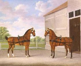 A Pair of Bay Carriage Horses in a Stable Yard 1784