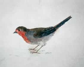 Robin, from The Farnley Book of Birds 19th