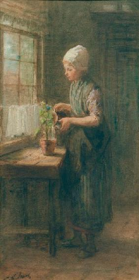 The New Flower 1880