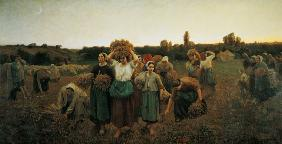 Calling in the Gleaners 1859