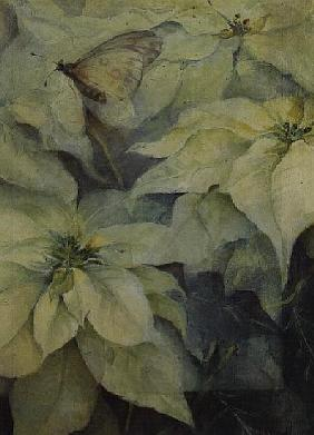 White Poinsettia with a butterfly (vertical)