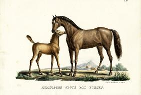 Arab Horse With Fowl 1824