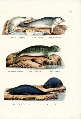 Common Seal 1824