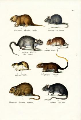 Different Kinds Of Mice 1824