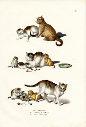 Domestic Cats 1824