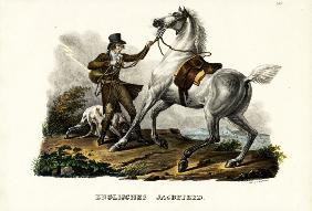 English Hunter Horse 1824