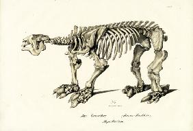 Giant Ground Sloth 1824
