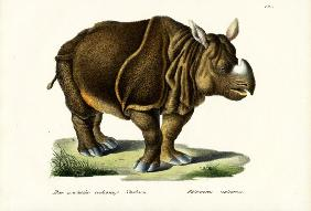 Greater Indian Rhinoceros 1824
