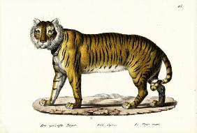 Royal Tiger 1824